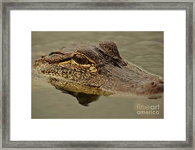 Juvenile Alligator Framed Print by Lynda Dawson-Youngclaus