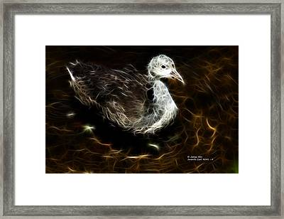Juvenile Coot 9042 - F Framed Print by James Ahn