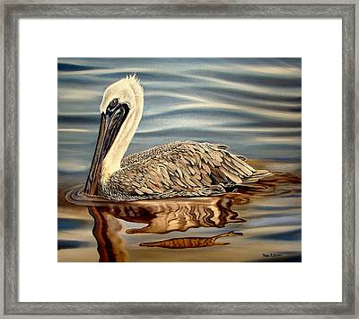 Juvenile Pelican Framed Print by Phyllis Beiser