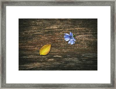 Juxtaposition Framed Print by Scott Norris