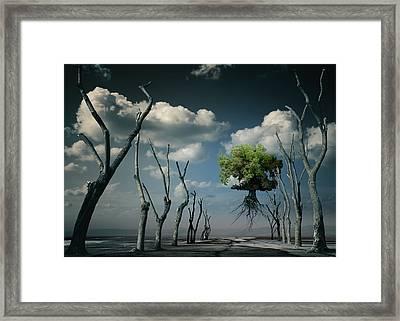 K81 Framed Print by Radoslav Penchev