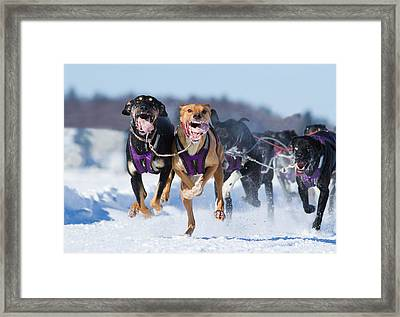 K9 Athletes Framed Print by Mircea Costina Photography