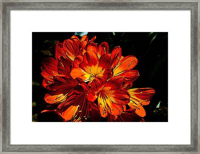 Kafir Lily Too Framed Print