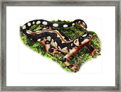 Kaisers Spotted Newt Framed Print by Roger Hall