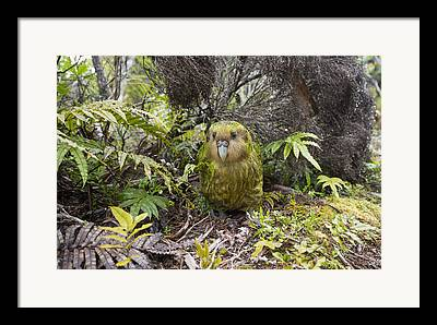 Forest Habitat Framed Prints