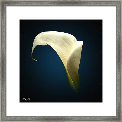 Cala Lily Framed Print by Mark Ashkenazi