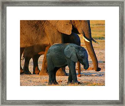 Framed Print featuring the photograph Kalahari Elephants by Amanda Stadther
