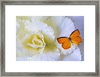 Kale And Orange Butterfly Framed Print by Garry Gay