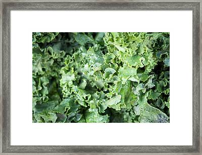 Kale For Sale At A Farmer's Market Framed Print by Julien Mcroberts