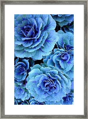 Kale Framed Print by Laurie Perry