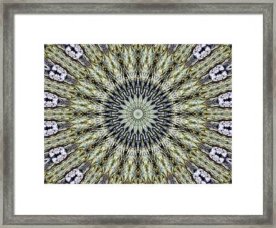 Kaleidoscope 6 Framed Print by Tom Druin