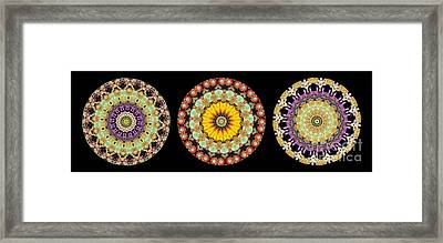 Kaleidoscope Ernst Haeckl Inspired Sea Life Series Triptych Framed Print by Amy Cicconi