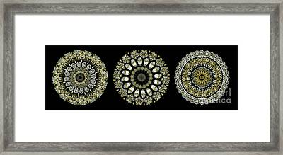 Kaleidoscope Ernst Haeckl Sea Life Series Steampunk Feel Triptyc Framed Print by Amy Cicconi