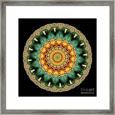 Kaleidoscope From Old Entomology Illustration Of Butterflies Framed Print by Amy Cicconi