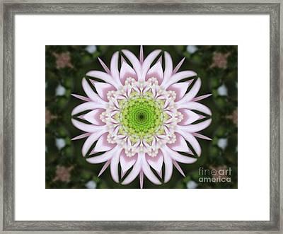 Kaleidoscope Pink Daisy Framed Print