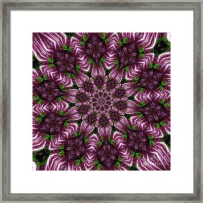 Kaleidoscope Raddichio Lettuce Framed Print by Amy Cicconi