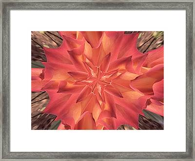 Framed Print featuring the photograph Kaleidoscope Rose by Michele Kaiser
