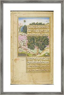 Kami Tree (mimusops Kauki) Framed Print by British Library