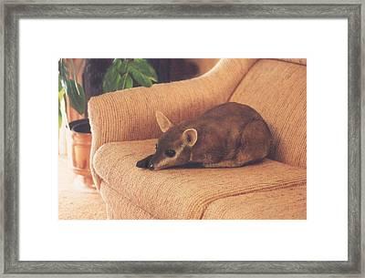 Kangaroo Buddy Sculpture Framed Print by Arlene Delahenty