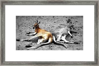 Kangaroo Heart Framed Print by Andrew Connolly