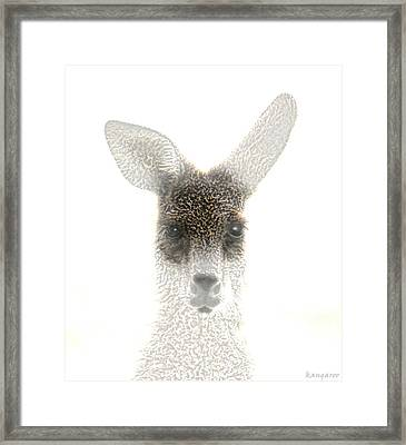 Framed Print featuring the photograph Kangaroo by Holly Kempe
