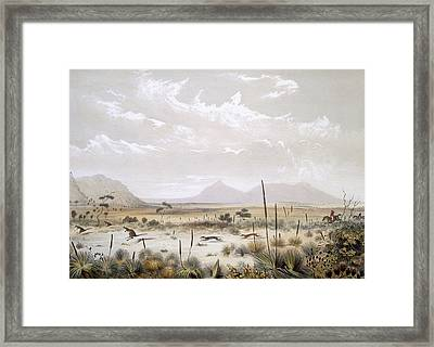 Kangaroo Hunting Near Port Lincoln Framed Print by George French Angas