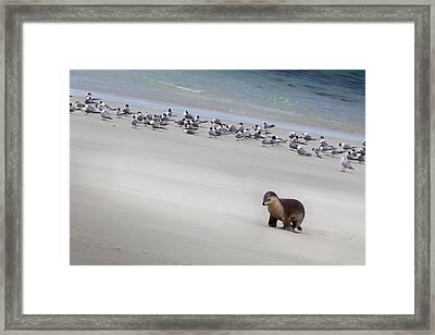 Kangaroo Island, Australia Framed Print