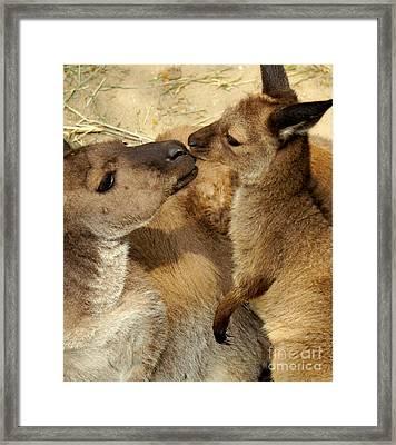 Kangaroo Kisses Framed Print