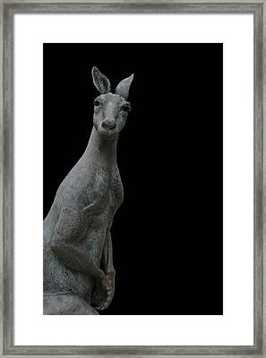 Kangaroo Smith On Black Framed Print by Gregory Smith