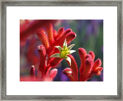 Framed Print featuring the photograph Kangaroo Star by Evelyn Tambour