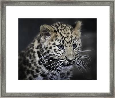 Framed Print featuring the photograph Kanika - Amur Leopard Portrait by Chris Boulton