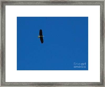 Kansas Eagle Framed Print