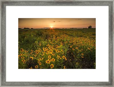 Kansas Wildflowers Framed Print