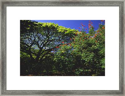 Kapiolani Flora II Framed Print by Morris  McClung
