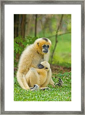 Karmic Bond Framed Print
