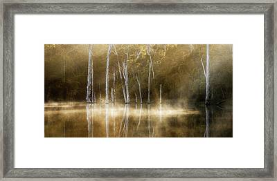 Karri Valley Framed Print