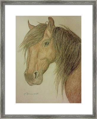 Kathy's Horse Framed Print by Christy Saunders Church