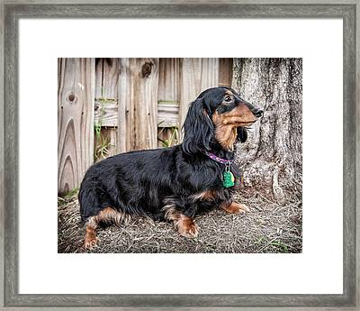 Framed Print featuring the photograph Katie by Jim Thompson