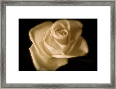 Katie's White Rose Framed Print