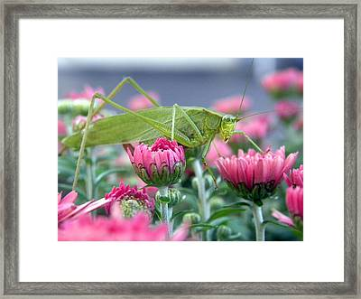 Framed Print featuring the photograph Katydid by Teresa Schomig