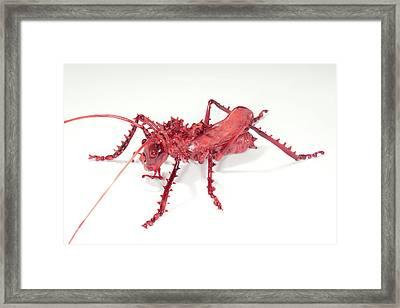 Katydid Framed Print by Tomasz Litwin