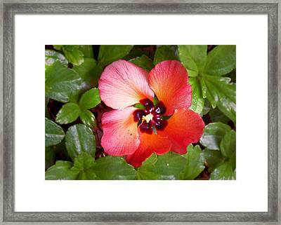 Kauai Flower Framed Print
