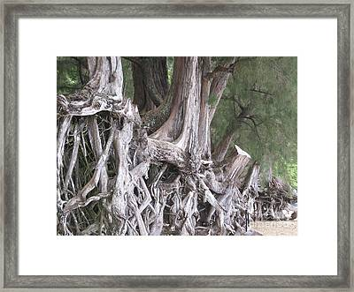 Framed Print featuring the photograph Kauai - Roots by HEVi FineArt