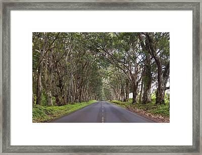 Kauai Tree Tunnel Road Framed Print