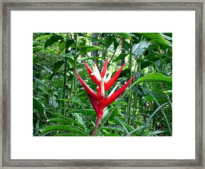 Kauai's Beauty Framed Print