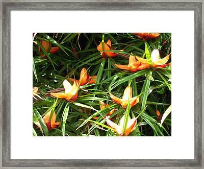 Kauai's Gift Framed Print