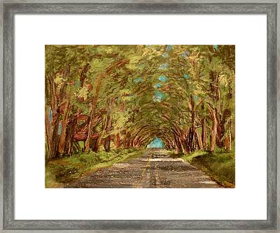Kauiai Tunnel Of Trees Framed Print