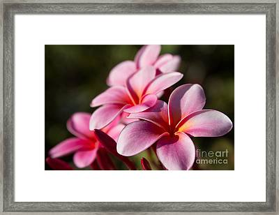 Kaupo Summer Treasure Framed Print by Sharon Mau