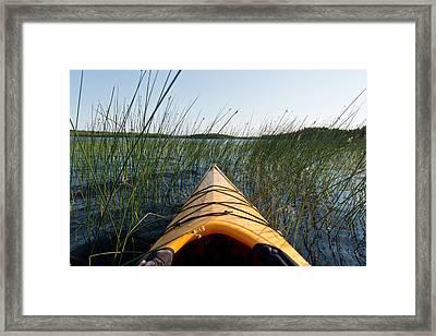 Kayaking Through Reeds Bwca Framed Print