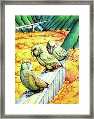 Kea Framed Print by Barbara Stirrup